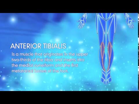 Reduce Shin Splints: Anterior Tibialis Stretches