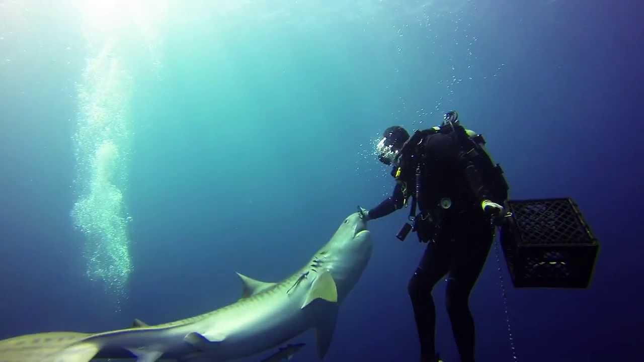 Scuba Diving Daytona Beach Florida The Best Beaches In World