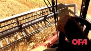 OFA Farm Facts: Harvesting Wheat in Ontario