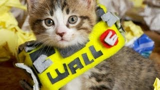 Disney Pixar's WALL-E (Cute Kitten Version)