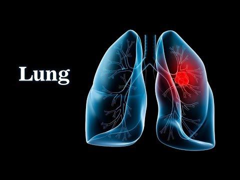 Pulmonary Ventilation System Respiratory