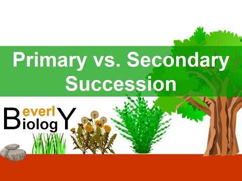 Primary Vs Secondary Ecological Succession