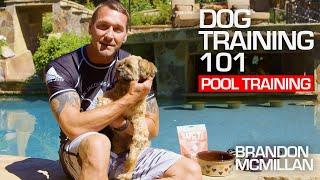 Dog Training 101: Pool Training | Brandon McMillan