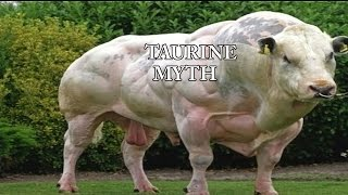 Taurine The Bull Testicle Myth