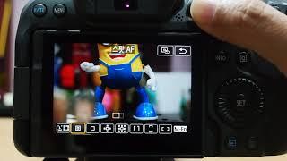Canon EOS R6 AF 영역 모드