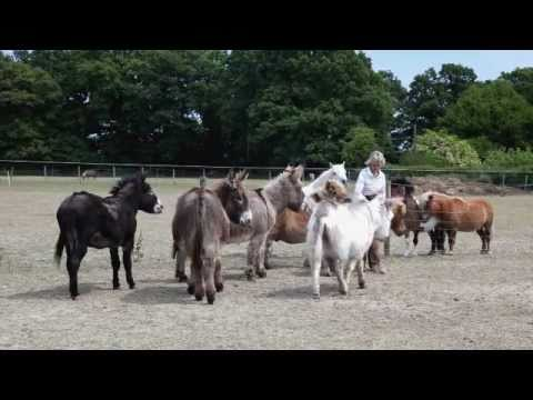 Alexandra Bastedo's ABC Animal Sanctuary.wmv