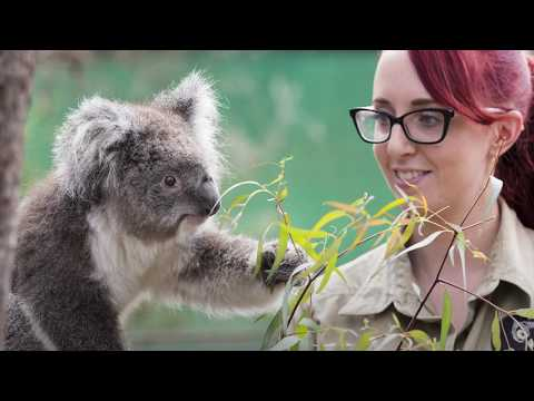 Melbourne - Victoria | Wildlife