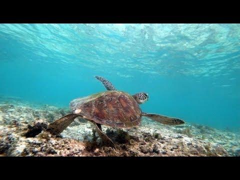 turtles In Cebu
