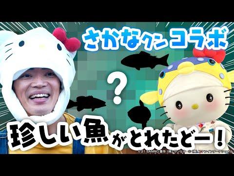 画像2: さかなクンとハローキティの夢のコラボ!いっしょに漁に出てみたよ! sanrio.site