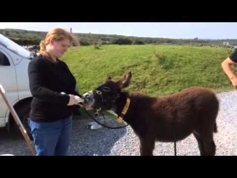 Casey feeding Jenny in the Burren, County Clare, Ireland