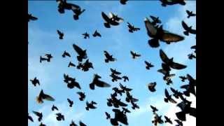 Fco. de Val: Las palomas del Pilar por Los Bocheros