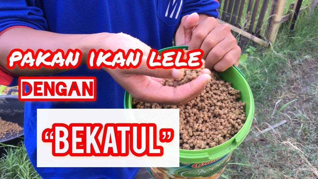 Pakan Alternatif Ikan Lele Dengan Dedak Bekatul Lele Budidayaikanlele Youtube