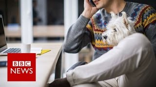 Inside the office where staff bring their dogs to work   BBC News