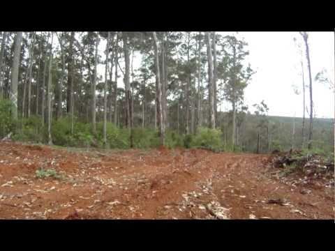 Australian deforestation