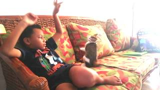 Cats and Kids - Funny Video Kris playing with a kitten
