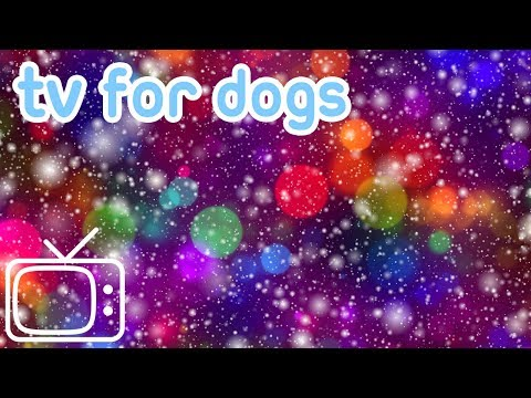 Videos for Dogs and Puppies with Music! Entertain Your Dog!