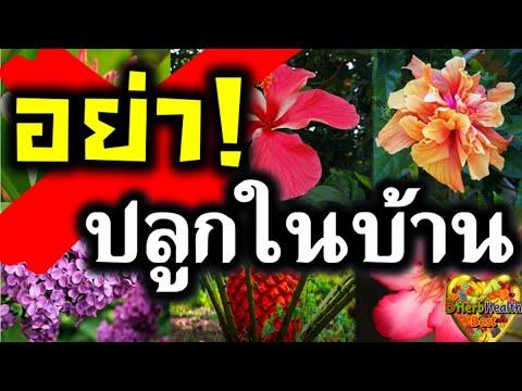 14 ต้นไม้ ไม่ควรปลูก ไม่นำเข้าบ้าน ห้ามปลูกในบ้าน อย่าปลูกในรั้วบ้าน ไม้อัปมงคล อับโชค💐🌼🌸ฮวงจุ้ยเสีย