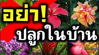 14 ต้นไม้ ไม่ควรปลูก ไม่ควรนำเข้าบ้าน ห้ามปลูกในบ้าน ต้นไม้ต้องห้าม ไม้อัปมงคล 🌼🌸อับโชค ฮวงจุ้ยเสีย