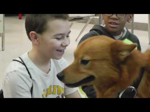 Therapy dog at Maple Point Middle School