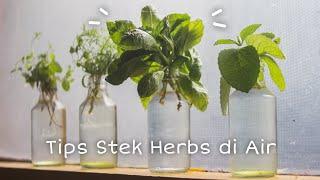 Tips Stek Air untuk Herbs | My Calm Diary