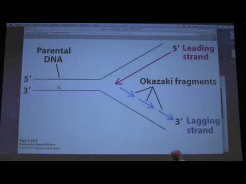 43. Kevin Ahern's Biochemistry - DNA Repair and Review Session