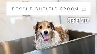Rescue Sheltie Full Groom! | Mobile Pet Groomer