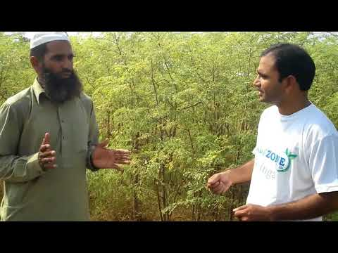 Moringa Grower in Pakistan visited Herbyzone Marketing Team 03334120090, 03460049624, 03000997462