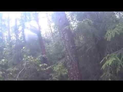 Где-то в мокром лесу после сильных дождей