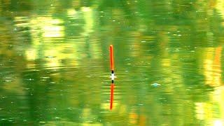 ЗАКИНУЛ ПОПЛАВОК И СРАЗУ ЕГО ПОТАЩИЛ САЗАН И КАРАСЯ рыбалка на поплавок