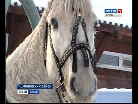 На ипподроме «Алтай» в Белокурихе стартовал новый соревновательный сезон