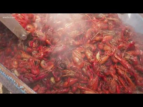 Today's Catch Seafood Preparing Hundreds Of Pounds Of Crawfish For Lent