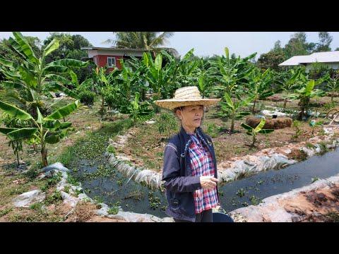 สุดๆแล้วทำไม่ถึงปีพื้นที่1ไร่!!สวยถูกใจจริงๆ..จากคนไม่มีเวลาและไม่เคยทำเกษตรมาก่อน