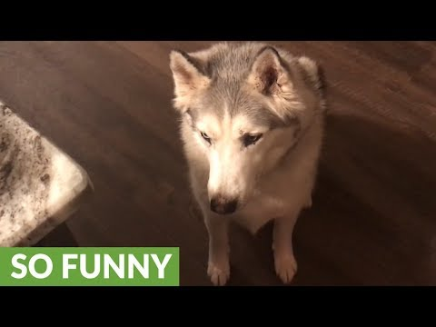 You'll Never Guess Where This Dog Leads His Owner!