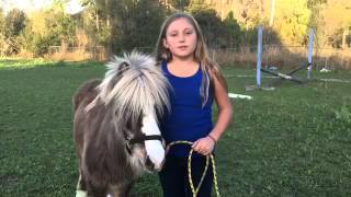 How to train a miniature horse to jump!