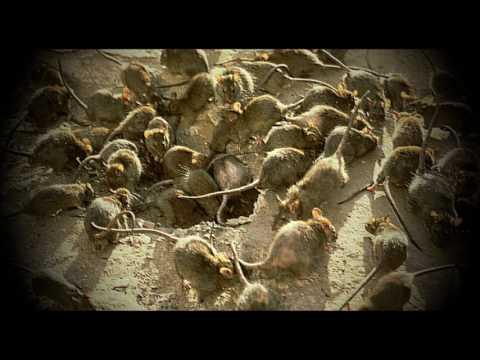 """Max von Sydow läser """"Råttorna på kyrkogården"""" (Henry Kuttner)"""