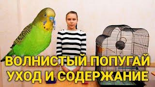 Волнистые попугаи - уход и содержание