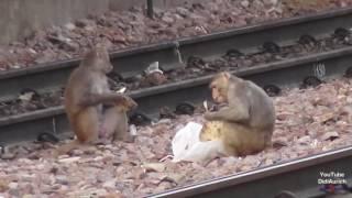Indien am Bahnhof von Sawai Madhopur Ranthambore Ranthambhore Rajasthan सवाई माधोपुर
