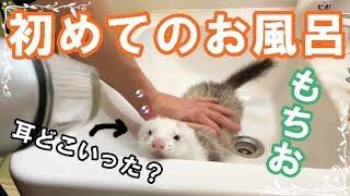 もちおが我が家に来てから初めてお風呂に入れました。 果たして無事に終...