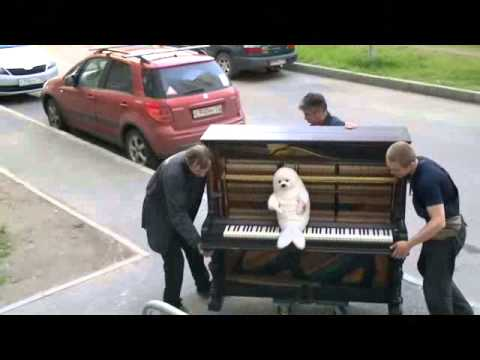 Профессиональная перевозка пианино.Тюлень верхом на фортепиано.