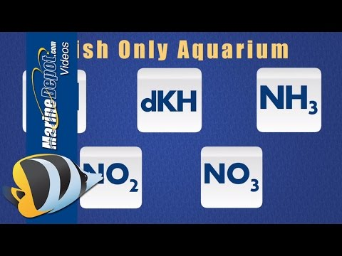 Aquarium Test Kits: Parameters To Test For In Fish-Only And Reef Tanks