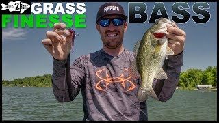 When and How to Drop Shot Bass in Grass