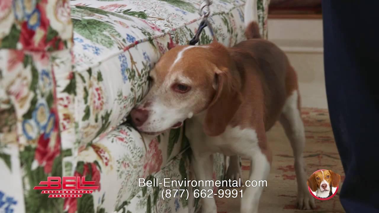 where's roscoe? he's workin' in philadelphia! - youtube