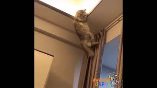 Funny Cats Jumping Fails Compilation | Funny Cat Videos Compilation 2021 | Fun with Pets Tv #shorts