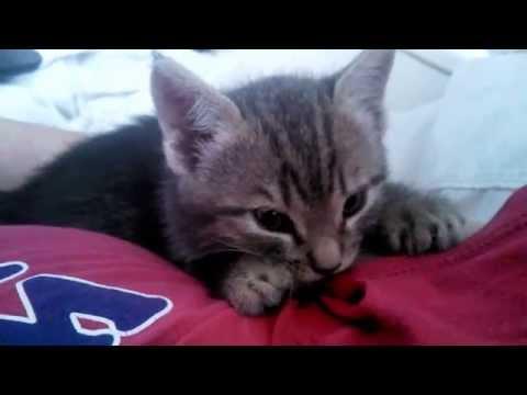 5 Wk Kitten