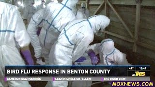 Bird Flu Hits Poultry Farms In Benton County In Washington State