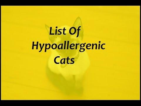 List Of Hypoallergenic Cats