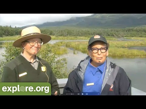 Sows And Cubs Of Brooks River - Live Chat