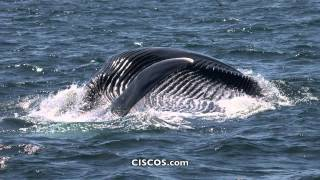 Channel Islands - Whale Watching