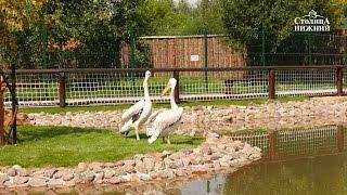 Нижегородскому зоопарку «Лимпопо» исполнилось 12 лет
