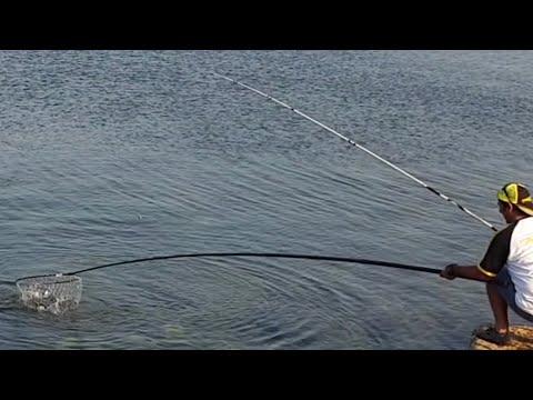 con il grande innesco d'esca , a pesca, se c'e' l'orata, difficilmente la canna rimarra' ferma